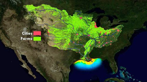 190612 Gulf of Mexico dead zone environmental research rain weather flooding News World
