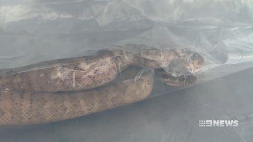 190603 Sydney pet shop bird cage coastal python snake surprise pets news NSW Australia