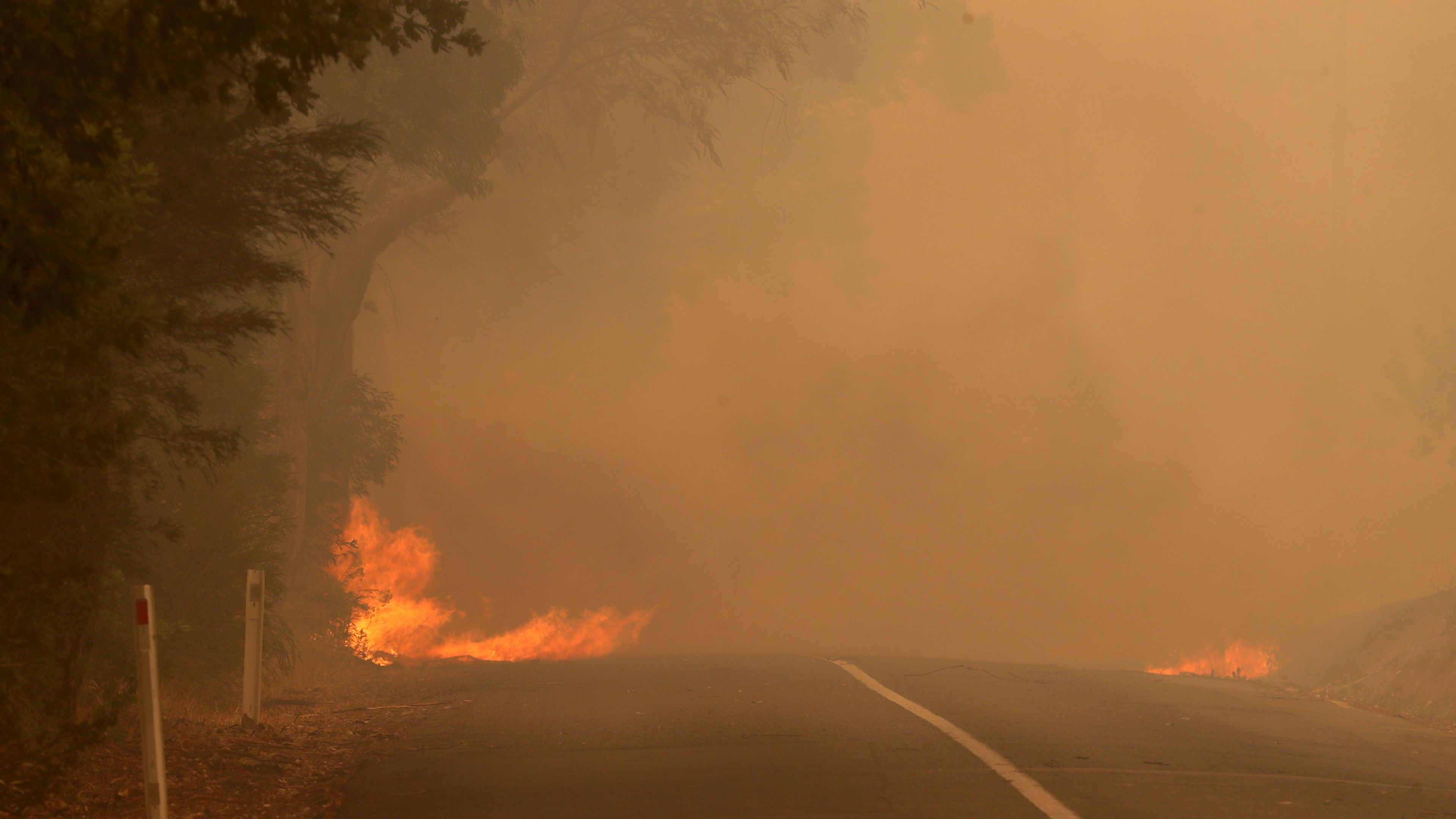 Falling tree sparked deadly SA bushfire
