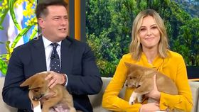 Karl and Ally meet 'Lucky' and 'Rocky'