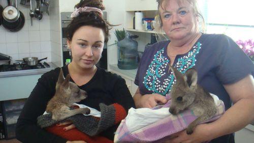 Driver mowed down 20 kangaroos in Australia, police say