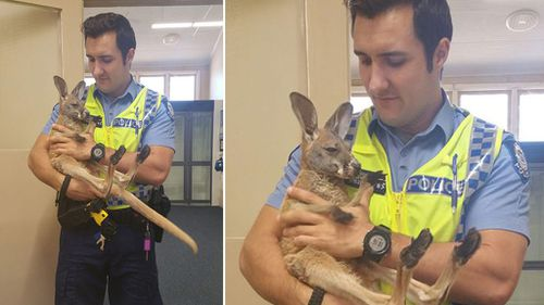 WA Police officer rescues kangaroo joey from wedge-tailed eagles