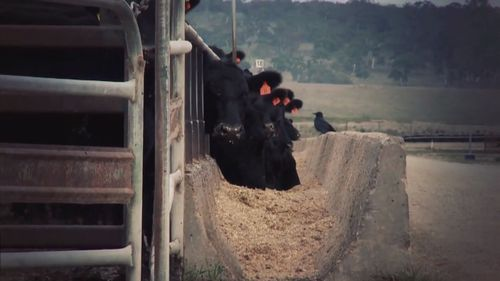 Farmers are struggling to feed their livestock.