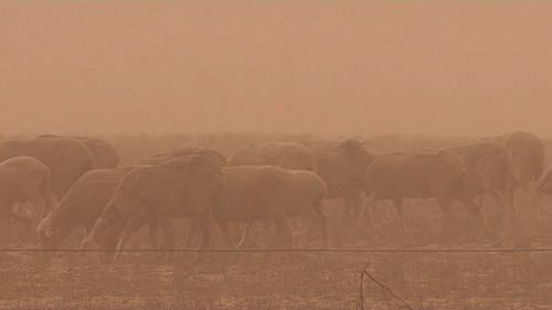 Farmers across the state have to pick up the pieces with dust and wind now adding to the issues caused by lack of rain. Picture: 9NEWS