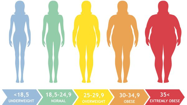 What Is Your Body Mass Index 9coach