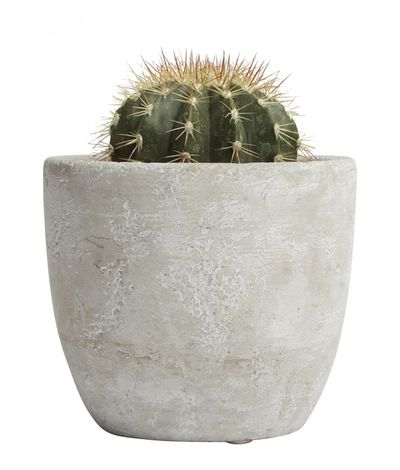 "<a href=""https://www.edibleblooms.com.au/buy/Succulents-Palms/Designer-Cactus/33912_Parent?gclid=COen0MHih9UCFRQEKgod83sCWw"" target=""_blank"">Edible Blooms Designer Cactus, $65.</a> Why? Once you become a parent you'll be flat out keeping your kids alive, let alone a plant. So get a cactus. They're a hardy desert plant. And you can also spike your husband with it when he doesn't do the washing up."