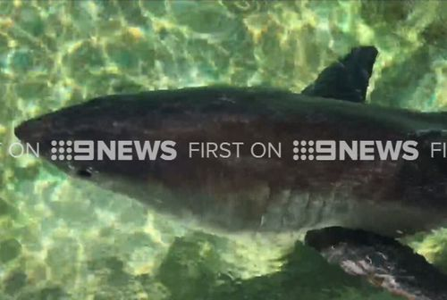 Marine experts cared for the animal at Manly Sea Life Sanctuary last night. (9NEWS)