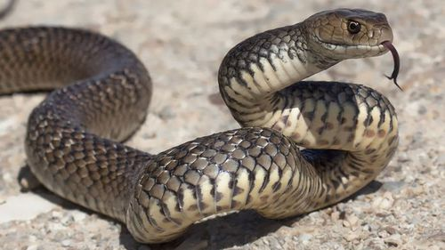 The young girl was bitten by a snake while on school property.