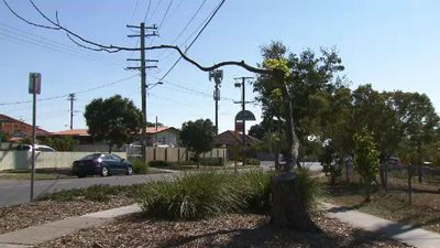 Brisbane council takes Energex to task for overzealous tree lopping