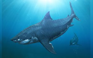 Giant shark was even bigger than we thought, researchers say