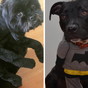 The cutest (and scariest) photos of your furry friends in Halloween costumes