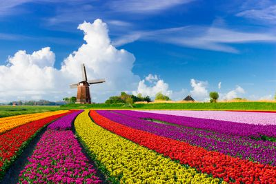 17. Netherlands