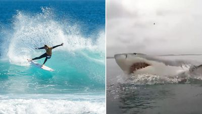Margaret River Surf Pro could be moved north due to shark threat
