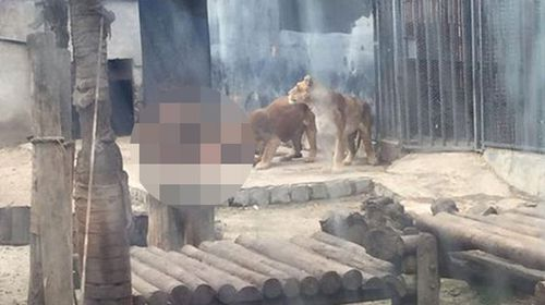 A man is mauled by lions in Santiago zoo late last week.