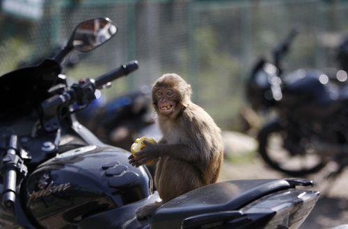 Baby stolen by monkey in India found dead