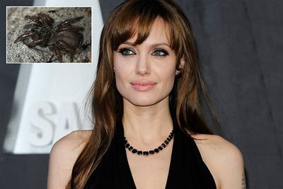 Aptostichus angelinajolieae is a species of trapdoor spider named after Angelina Jolie. Can you see the resemblance?