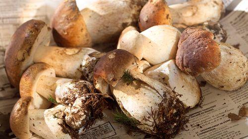 Forest rangers on high alert for gangs selling wild mushrooms to restaurants