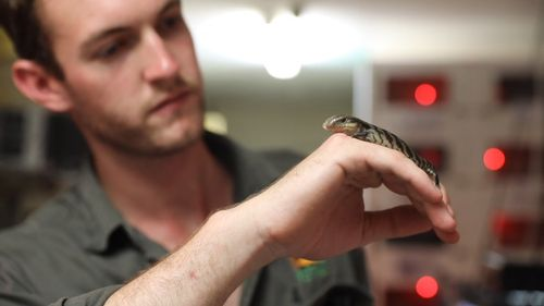 Reptile keeper Jake Menley said staff are carefully monitoring Lucky's progress to make sure he has the best chance at life.