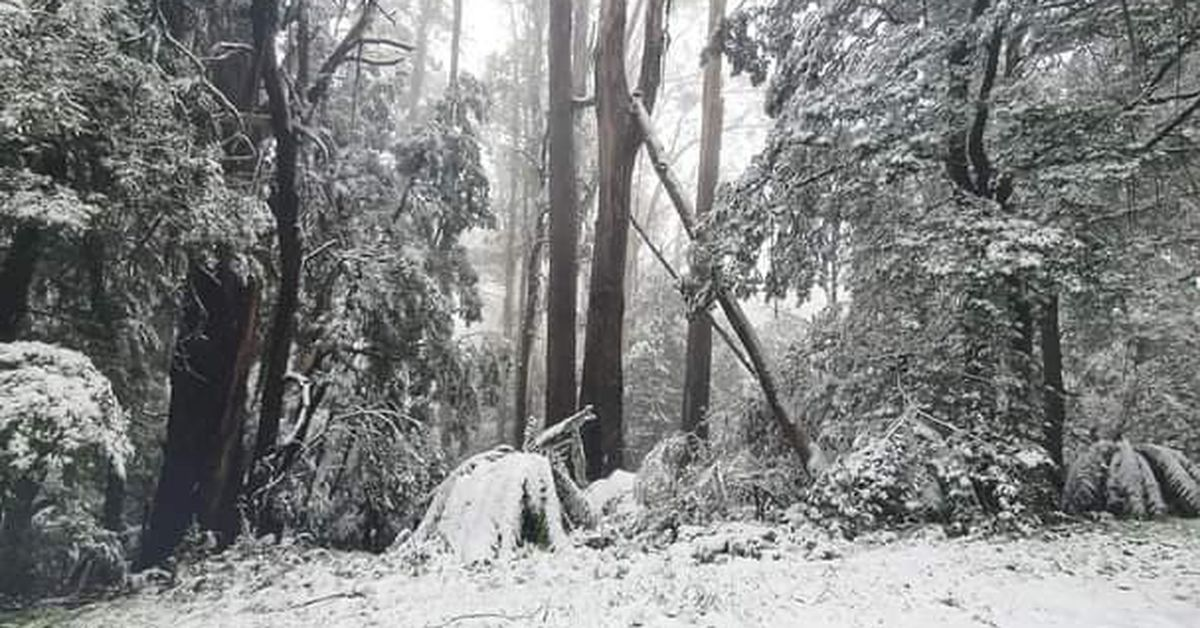 Cold snap sees heavy snowfall, rain and wind lash Victoria