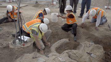 Construction workers discover dinosaur bones under building site
