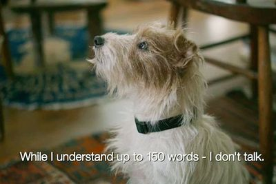 Jack Russell terrier Cosmo had subtitles for his 'dialogue' with his owner, played by Ewan McGregor. Cosmo's quite the busy superstar: he's also appeared in <i>Hotel for Dogs</i> and <i>Paul Blart: Mall Cop</i>.