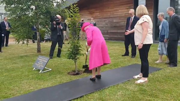 Queen's sassy comment when planting a tree