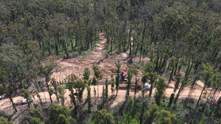 Human-made mass 'now outweighs biomass'
