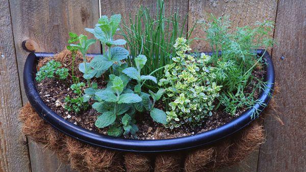 Herb garden tips