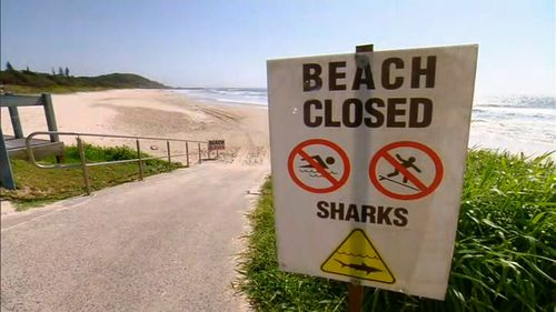 The Queensland government is facing increasing pressure to reinstall baited drumlines and allow shark culling after the latest attack.