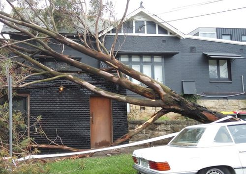 A tree fell near a home in Drummoyne in Sydney during yesterday's wild storm.