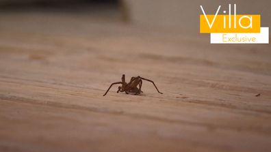 Exclusive: Jessie bravely rescues a huntsman