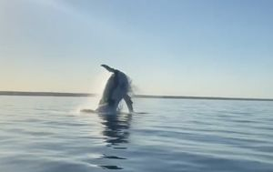 Skipper captures extraordinary moment giant whale emerges alongside boat in WA