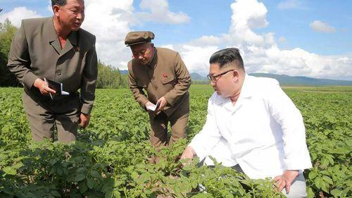 Kim Jong-un in a potato field. (KCNA)