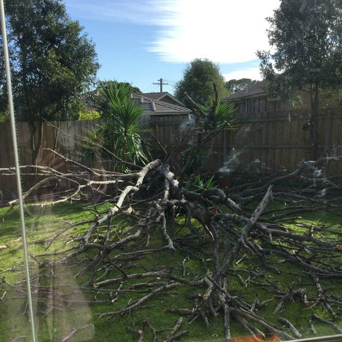 The winds knocked over this tree at a yard in Langwarrin. Picture: Deanne Wilkinson