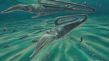 An artist's impression of Diplomoceras maximum