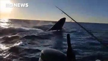 Father and son hook on to whale during  fishing trip