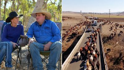 Desperate farmers spend a year on the road to find food for starving cattle