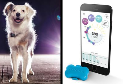FitBark dog activity tracker