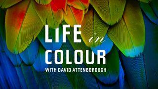 david attenborough's life in colour