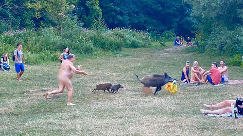 German nudist snapped giving chase to cheeky laptop-bag boar thief