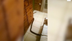 Woman wakes up to massive snake in bed with her