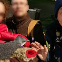 Penguins nabbed by Kiwi cops around sushi truck