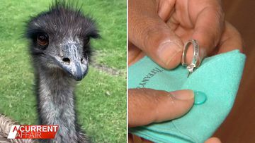 An emu's expensive brazen daylight robbery