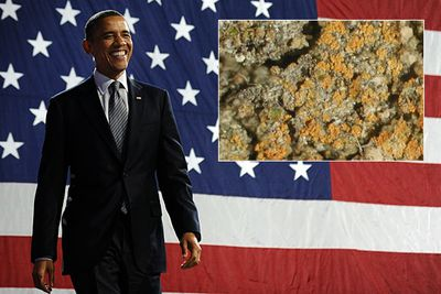 Caloplaca obamae is a species of lichen named in honor of US President Barack Obama. (We suspect the scientist who discovered the fungus might have been a Republican!)