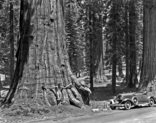 Two men lean against a Sequoia tree in the Sierra mountains in California, Yosemite National Park, California