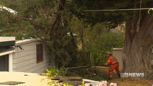 Winds brought down trees across both states. (9NEWS)