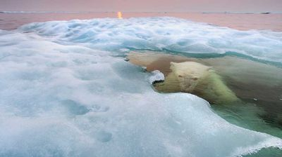 The water bear. Photo: Paul Souders, USA.