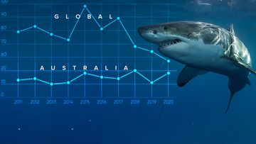 Shark attacks globally were down last year but fatal attacks spiked, with most occurring in Australia.
