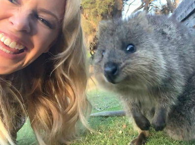 Quokka selfies are harder than they look apparently...