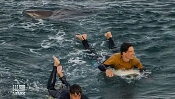 Two surfers at Bells Beach in Victoria paddle to shore as a large shark stalks them.
